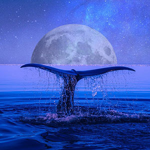 whale-song-432hz